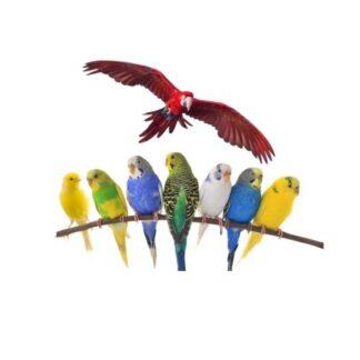 Vogel benodigdheden
