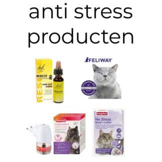 Anti Stress